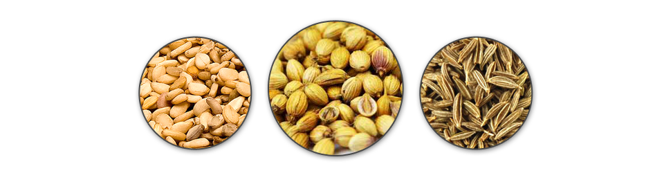 Fennel Seeds Suppliers India